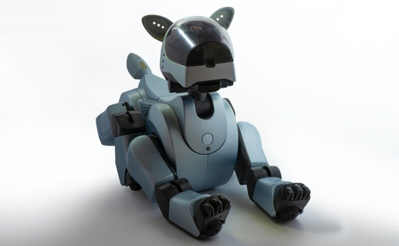 A gray robot dog looking into the camera.