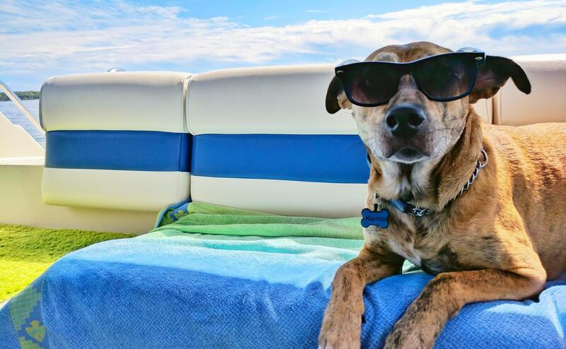 A dog with sunglasses lying on a sunbed on the beach.
